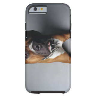 Pit Bull Terrier Lying Down Tough iPhone 6 Case