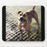 Pit Bull Terrier Mouse Mats