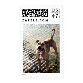 Pit Bull Terrier Postage Stamp