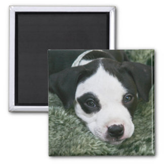 """Pit Bull Terrier Pup Magnet - """"Angie"""""""
