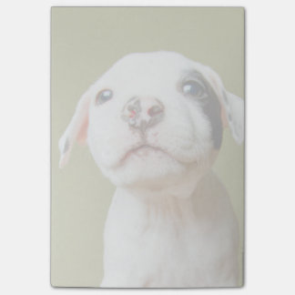 Pit Bull With Black Spotted Eye Post-it Notes
