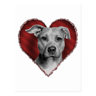 Pit Bull with Heart Postcard