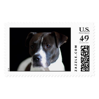 Pit Bulls are great dogs! Postage Stamp