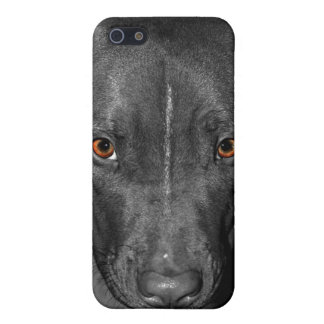 Pit Bull's Eyes (Black and white, color) Case For iPhone SE/5/5s