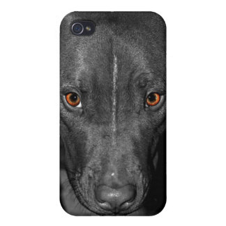 Pit Bull's Eyes (Black and white, color) Cases For iPhone 4
