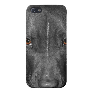 Pit Bull's Eyes (Black and white, color) Cover For iPhone SE/5/5s