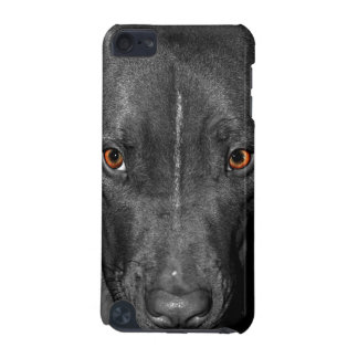 Pit Bull's Eyes (Black and white, color) iPod Touch (5th Generation) Cover