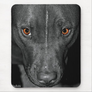 Pit Bull's Eyes (Black and white, color) Mouse Pad