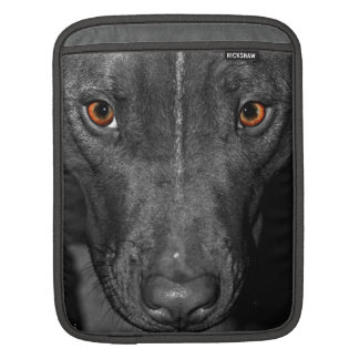 Pit bull's yellow-orange eyes, on a b&w portrait sleeve for iPads