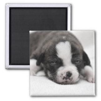 Pit Puppy 2 Magnet