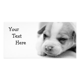 Pit Puppy Photo Card