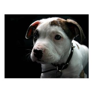 Pit Puppy Postcard
