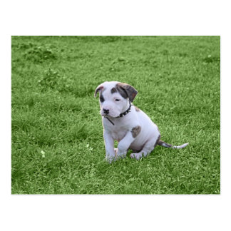 Pit Puppy T-Bone Postcard