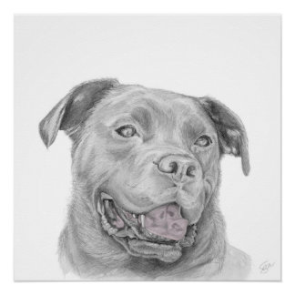 Pitbull Art Drawing American Staffordshire Terrier Poster