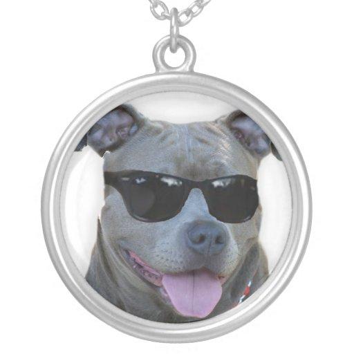 Pitbull azul con los vidrios collar personalizado