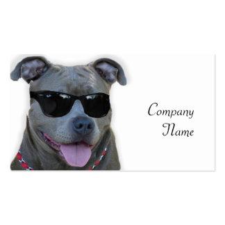 Pitbull azul con los vidrios tarjetas de visita