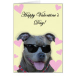 Pitbull azul del el día de San Valentín feliz con  Tarjeta De Felicitación
