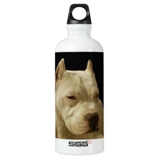Pitbull blanco Terrier