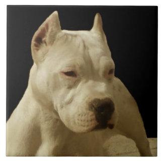 Pitbull blanco Terrier Azulejo Cuadrado Grande