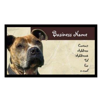Pitbull Business Card