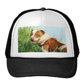 Pitbull cap trucker hat