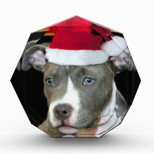 Pitbull del navidad