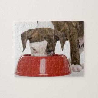 Pitbull del perrito que come fuera de plato rompecabezas con fotos