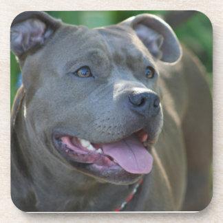 Pitbull Dog Beverage Coaster