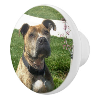 Pitbull dog ceramic knob