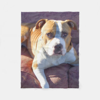 Pitbull dog fleece blanket