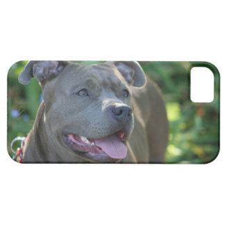 Pitbull dog iPhone 5 case