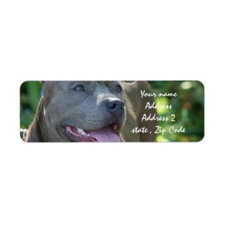 Pitbull Dog Return Address Label