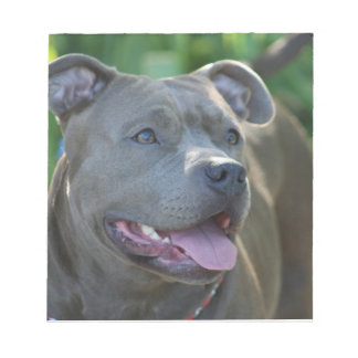 Pitbull dog notepad