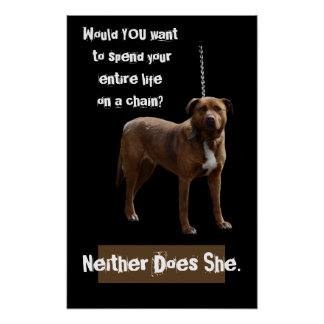 Pitbull Dog on a Chain Poster