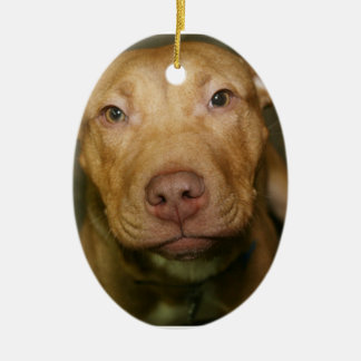 PITBULL DOG ORNAMENT