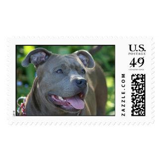 Pitbull Dog Postage Stamp