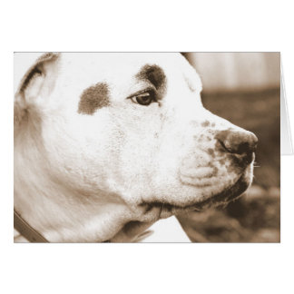 pitbull dog sepia color hate deed not breed card