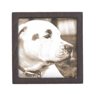 pitbull dog sepia color hate deed not breed jewelry box