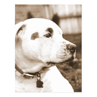 pitbull dog sepia color hate deed not breed postcard