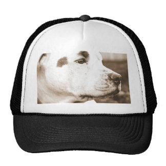 pitbull dog sepia color hate deed not breed trucker hat