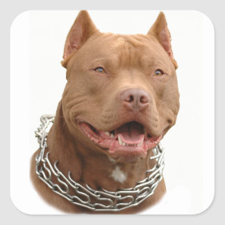 Pitbull dog square sticker