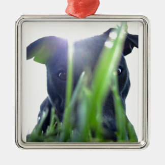 Pitbull in the Grass Square Metal Christmas Ornament