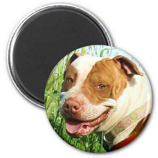 Pitbull magnet