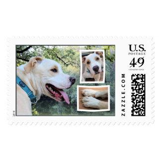 Pitbull - Maverick Composite Postage Stamp