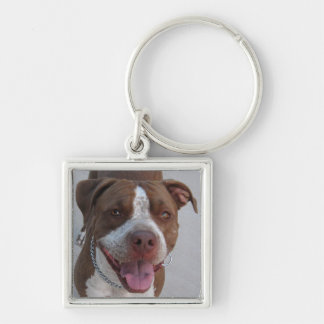 Pitbull Play With Me Silver-Colored Square Keychain