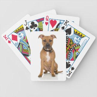 Pitbull Playing Cards