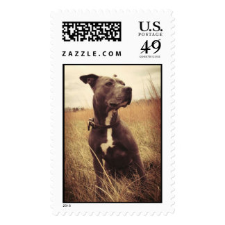 Pitbull Postage