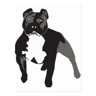 Pitbull Post Card