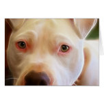 Pitbull Puppy Dog Eyes Art Photography Greeting Card