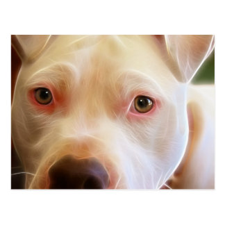 Pitbull Puppy Dog Eyes Art Photography Postcard
